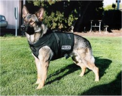 policedog