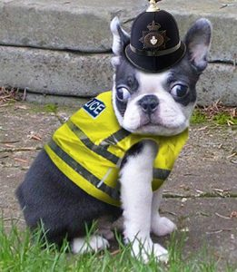 Police_dog_cute_we_dont_need_any_trouble_now_do_we