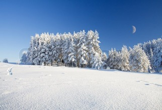 3572428-snow-field-and-forest-under-blue-sky-with-crescent.jpg